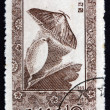 Postage stamp North Korea 1965 Chinese Oak Silk Moth — Stock Photo #55615087