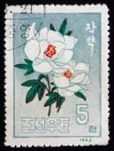 Postage stamp North Korea 1963 Peony, Paeonia, Flowering Plant — Stock Photo
