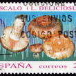 Postage stamp Spain 1994 Saffron Milk Cap, Mushroom — Stock Photo #64639283