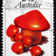 Postage stamp Australia 1981 Cortinarius Cinnabarinus, Mushroom — Stock Photo #64808689