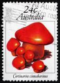 Postage stamp Australia 1981 Cortinarius Cinnabarinus, Mushroom — Stock Photo