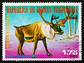Postage stamp Equatorial Guinea 1977 Caribou, Rangifer Tarandus, — Stock Photo