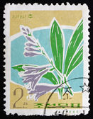 Postage stamp North Korea 1966 Hosta, Herbaceous Perennial Plant — Stock Photo