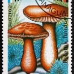 Postage stamp Nicaragua 1985 Boletus Luridus, Mushroom — Stock Photo #74036323