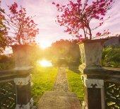Garden at sunset — Stock Photo
