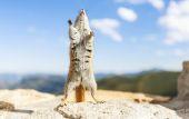 在石头上的花栗鼠 — 图库照片