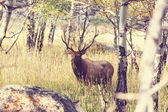 олени в лесу — Стоковое фото