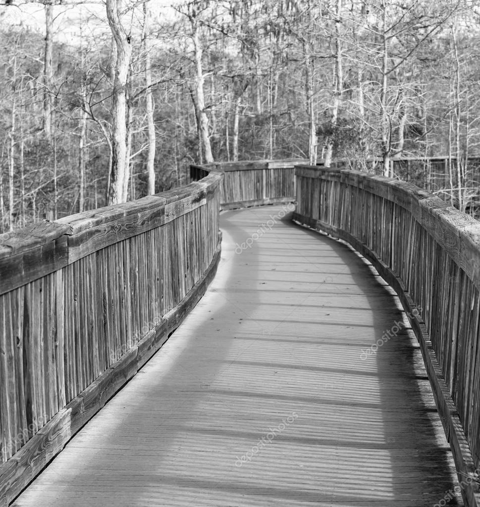 在沼泽的木板桥— photo