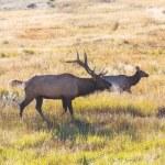 Deers in autumn — Stock Photo #58262845
