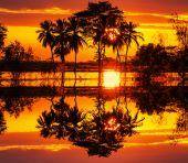 浸水フィールド — ストック写真