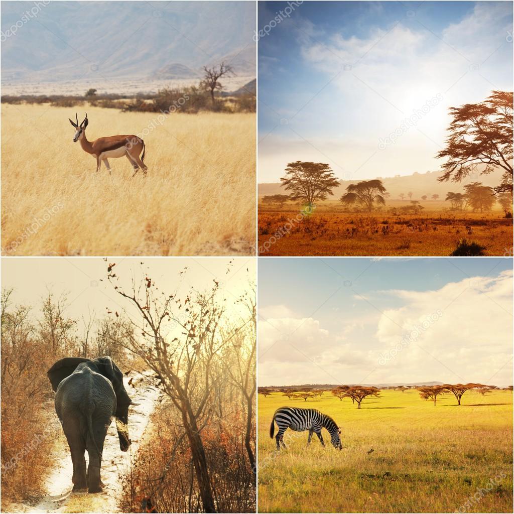 非洲野生动物园 — 图库照片08kamchatka#59359341