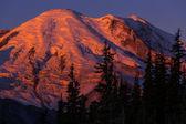 Monte Rainier — Foto Stock