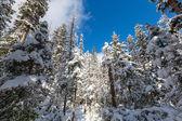 Inverno nas montanhas — Fotografia Stock