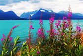 Northern Norway landscapes — Stock Photo
