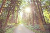 Road in forest between trees — Stock Photo
