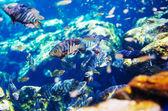 Mexican cenote underwater — Stockfoto