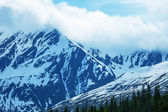 Mountain meadow landscape — Stock Photo