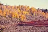 Rural forest in autumn — Stock Photo