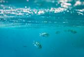 Coral fish in Red Sea — Stock Photo