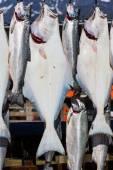 Fresh caught fishes — Stock Photo