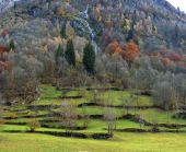 Mountain pasture in the Alps — Stock Photo