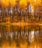 Fall refletion — Stock Photo
