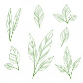 Stylized leaves — Stock Vector