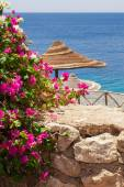 Sea, bougainvillea and beach umbrella — Foto de Stock