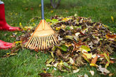 Fall leaves with rake — Stock Photo