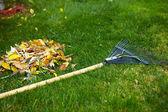 秋の葉の熊手 — ストック写真