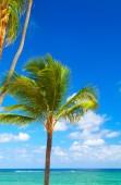 Тропическая пальма. — Стоковое фото