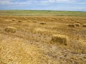 Straw bales in agricultural harvested wheatfield — Stock Photo