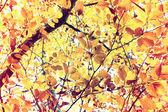 Sonbahar. — Stok fotoğraf