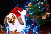 Christmas conceptual image. — Stockfoto