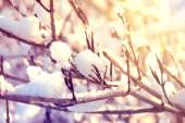 Winter. — Stock Photo