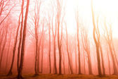 Red forest. — Stock Photo