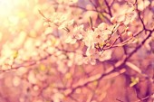 Spring and nature. — Stock Photo