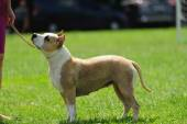 Dog on green blurred background — Stock Photo