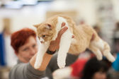 Funny cat — ストック写真