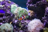 Sea fish — Stock Photo