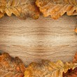 Dry oak leaves as frame — Stock Photo #52555449