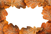 Dry oak leaves as frame — Stock Photo