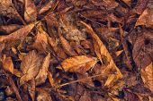 Dry autumn leaves as background — Stock Photo