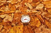 Vintage alarm clock in dry autumn leaves — Stock Photo