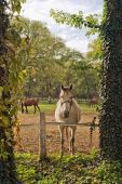 Beautiful White Horse on the Farm ranch — Stock Photo