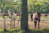Beautiful Pair of Horses on the Farm ranch — Stock Photo