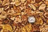 Vintage alarm clock in dry autumn leaves — Stock Photo