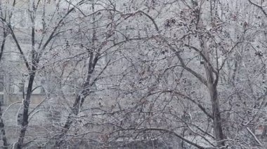 Turbulent snowfall detail in the tree park as winter season weather background. — ストックビデオ