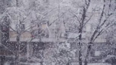 Turbulent snowfall detail in the tree park as winter season weather background. — Stock Video