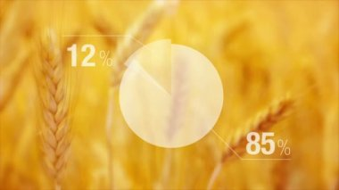 Animated Chart For Wheat Yield in Agricultural cultivated field. — Stock Video